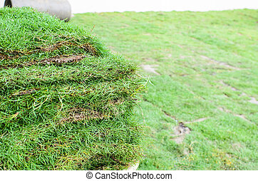 Green grass stack ready for spreading plant in garden.