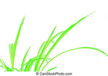 Green Grass - Green grass illustration