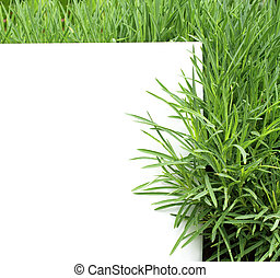 Green grass. Isolated over white