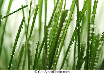 green grass straws - Close-up of fresh green straws with...