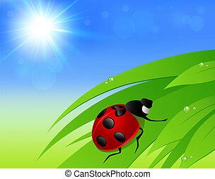 Green grass, sun and ladybird
