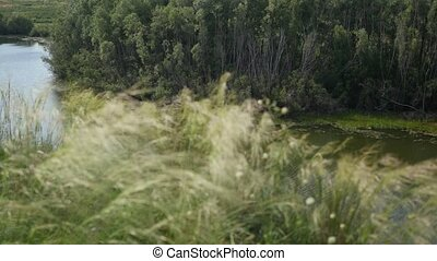 Green grass swaying in the wind near the river