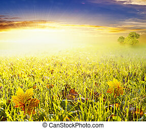 Green field in bright sunset