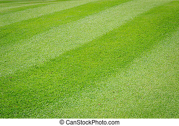 Green grass texture in  golf court