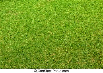 Green Grass Texture Nature Background