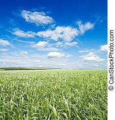 green grass under cloudy sky