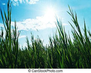 Green grass under the bright sun light, abstract backgrounds