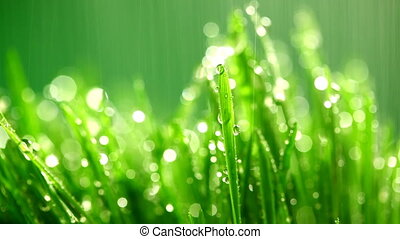 green grass under the rain