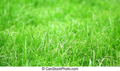 green grass on a wind detail