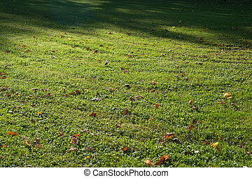 Green grass with autumn leaves
