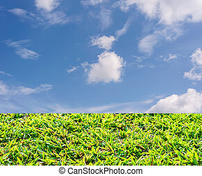 Green grass with blue sky and white cloud