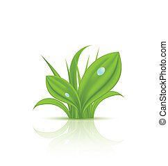Green grass with drops isolated on white background