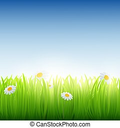 Green grass with flowers.
