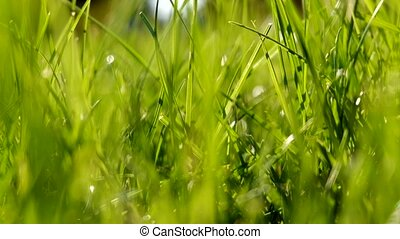 Green grass with green blurred background