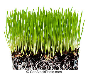 green grass with ground isolated on white background