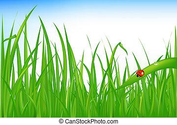 Grass With Ladybird - Green Grass With Ladybird