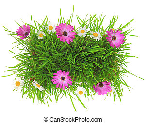 Green grass with pink and white flowers isolated