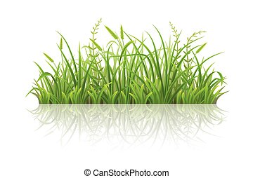 Green grass with reflection