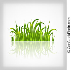 Green grass with reflection, isolated on white background