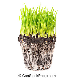 Green grass with roots - Green grass and soil from a pot...