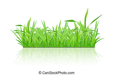 Green grass with shadow on white background