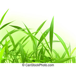 Green Grass with space for text