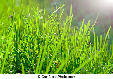 Green grass with sun background