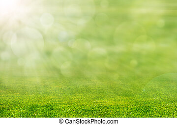 Green Grass with Sun Light - Green grass with ray of light...