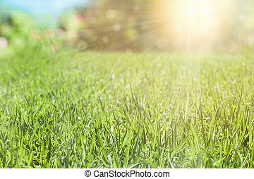 Green grass with sun light, nature background