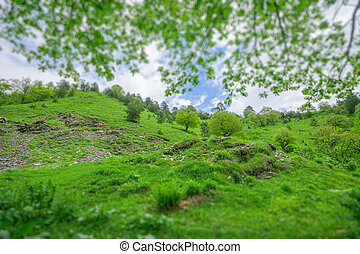Green grass with trees