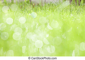 green grass with water dew - Abstract spring background of...