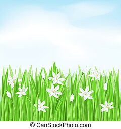 Green grass with white flowers. Spring Greeting Card