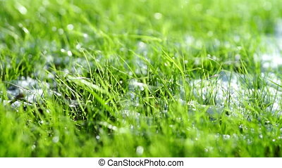 Green grass with white snow close-up - White snow laying on...