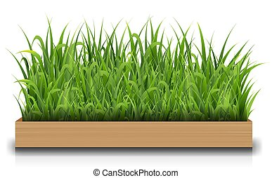 Green Grass With Wood