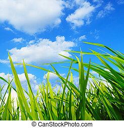 green grass,environmental protection concept - green...