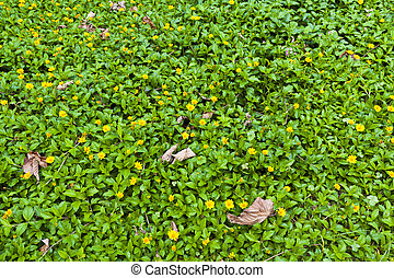 Green grasses background with yellow flowers