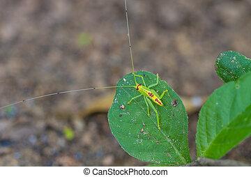 green grasshopper in nature