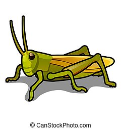 Green grasshopper isolated on a white background. Locusts. Pests of agriculture. Vector cartoon close-up illustration.