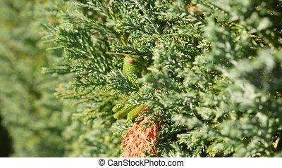 Green Grasshopper. Macro, Colorful. 4k slow motion - Green...