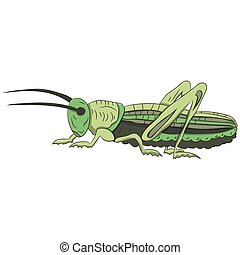 Green grasshopper on a white background. vector illustration. Hand drawing.