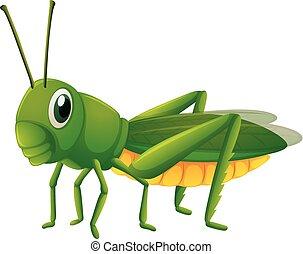 Green grasshopper on white background