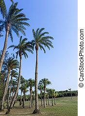 green grassland , Eluanbi Park, Kenting, Pin-Don,Taiwan -...