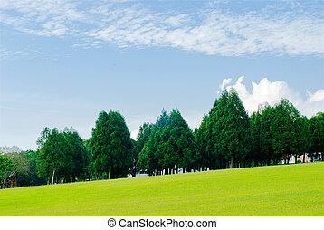 Green grassland, pine trees under blue sky