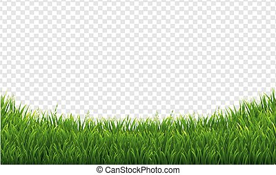 Green Green Grass Isolated Transparent Background