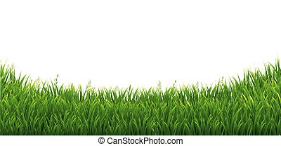 Green Green Grass Isolated White Background