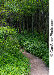 Green Ground Cover Flanks Gravel Trail in Summer Forest in Montana