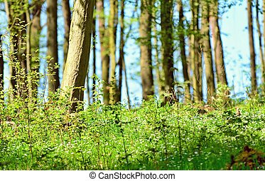 Close-up of a small green growing trees and bushes against a trees forest background. Focused on foreground.