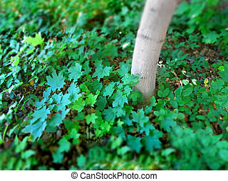 Green growth tree and plants with narrow focus - Detail of ...