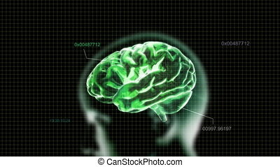 green head brain with code - X-ray Brain to represent the...