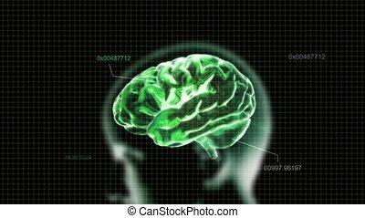 green head brain with code